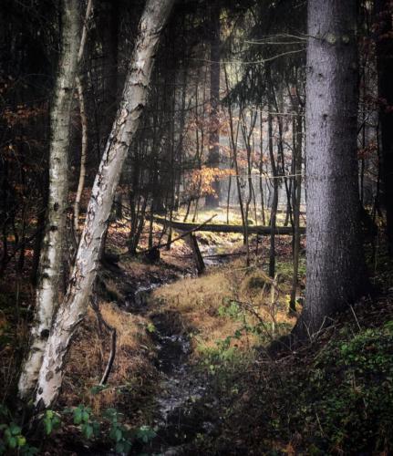 Steudacher Wald